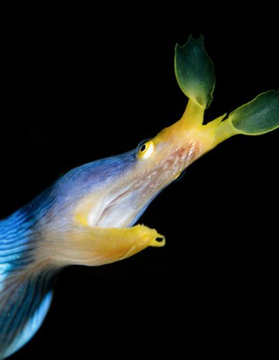 Picture of the month by our long time friend and Guest Kurt Ochsner also from Switzerland. It shows a beautiful Moray Eel.